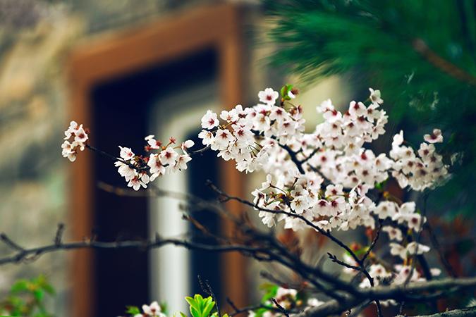 中国养老地产产业结构之老年服务产业(二)-养老院设计 |养老地产 |辽宁中古养老院规划设计研究所